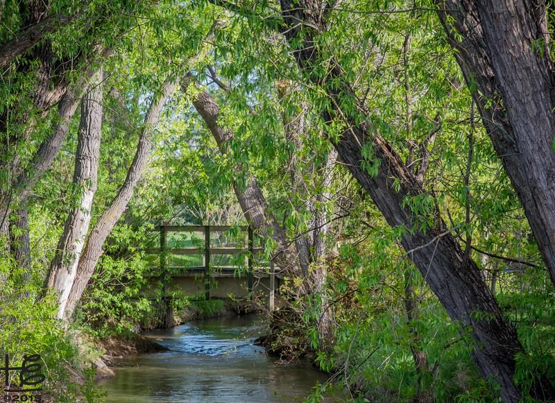 tree canopied creek