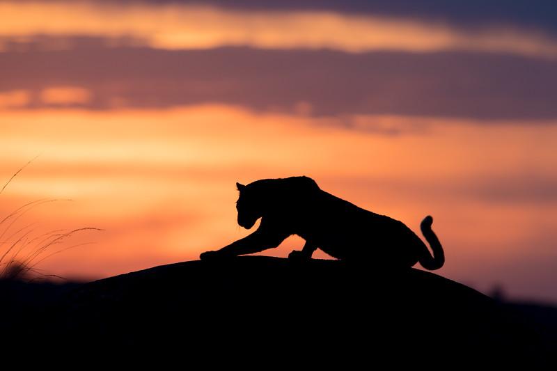 Africa  - 101016- 269-Edit.jpg