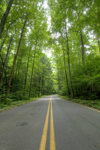 Beautiful view of the forest along Cherokee Orchard Road (Traffic Light #8) in the Great Smoky Mountains National Park in Gatlinburg, TN on Sunday, August 4, 2013. Copyright 2013 Jason Barnette