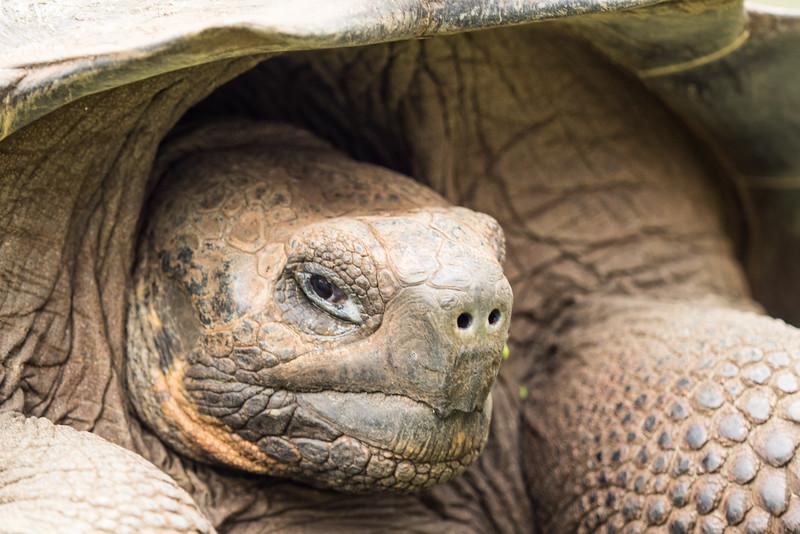 Galapagos-Best-139.jpg