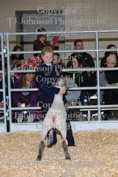 2016 KISD Lamb Show Class 1