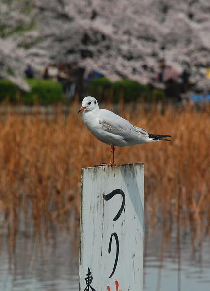 27-Japan10_1031.JPG