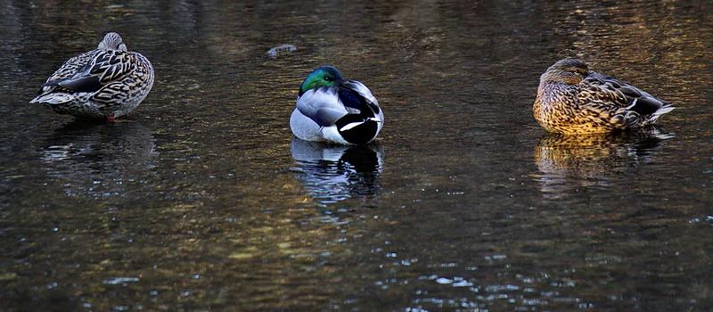 Neale Jenks.2.Duck sryle Siesta.jpg