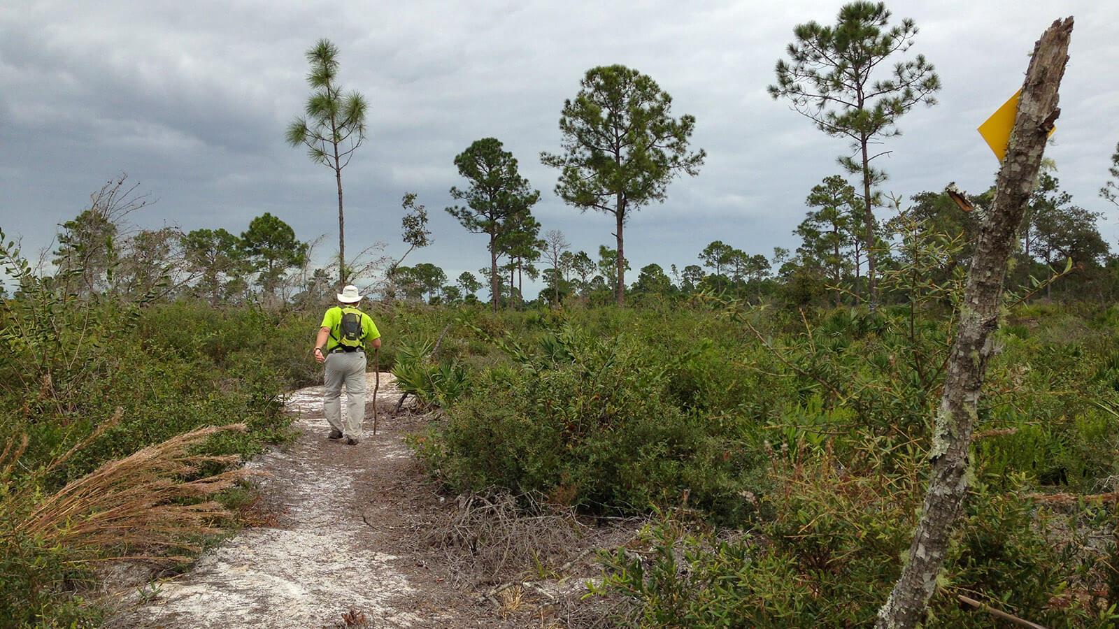 John hiking on sand trail between pines