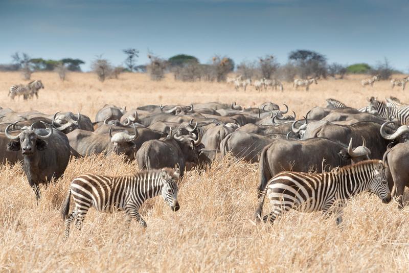 Africa - 102116 - 8189.jpg
