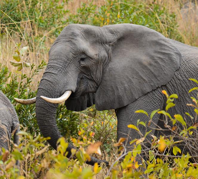 Elephants_Kruger-1.jpg