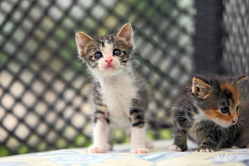 kittens_018-1.jpg