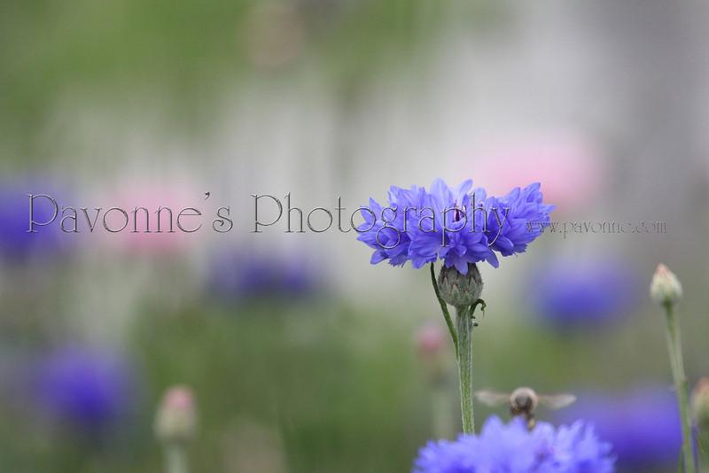 Flower Two.jpg