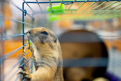 062618 Biology Lab - Prairie Dog Visit