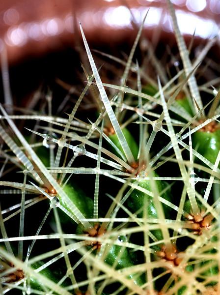 Cacti 060520--3.jpg