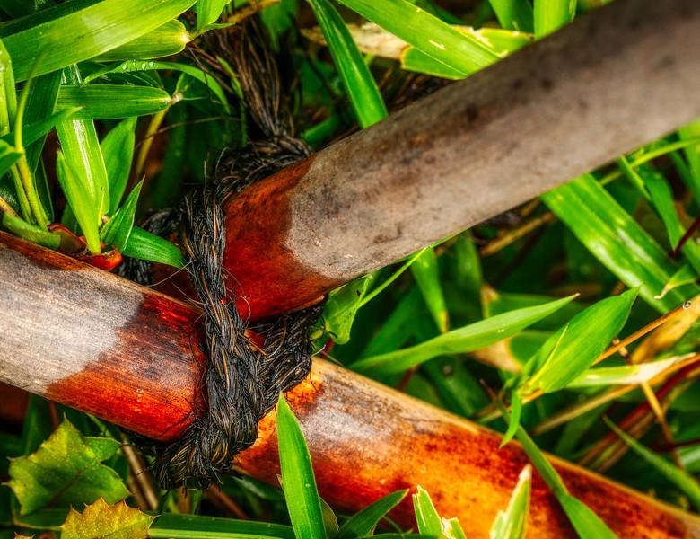 Bamboo 8, Hakone Garden, Saratoga, California, 2010