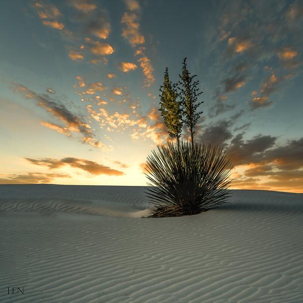 White Sands Cataus Sunset TEN_.jpg