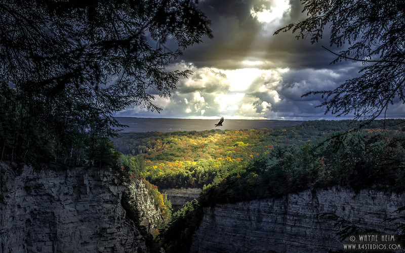 Lone Eagle     Photography by Wayne Heim