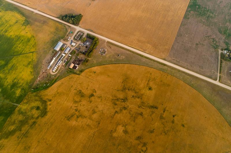 barley 42.jpg