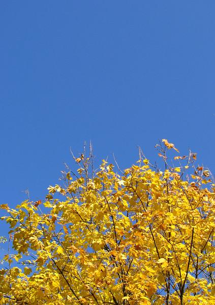 Autumn sky in Kyiv