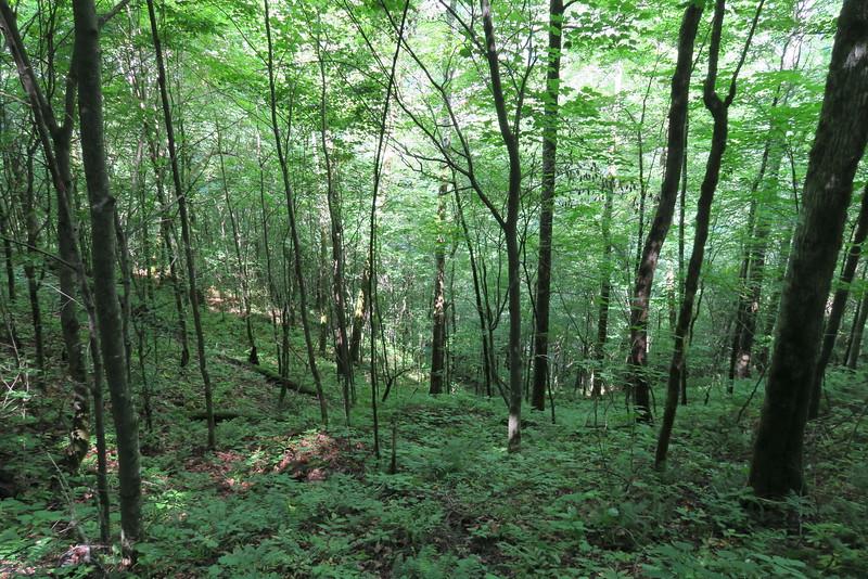 Enloe Creek Trail - 3,980'