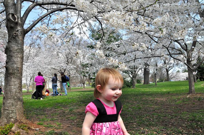Cherry Blossoms 2014 057.jpg