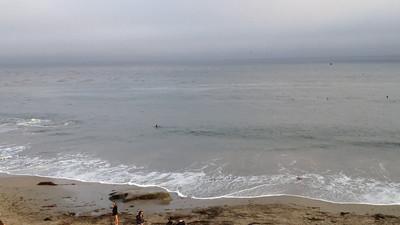 Humpback whale chowing down in Santa Cruz