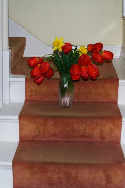 Tuiips on the Stairs.jpg