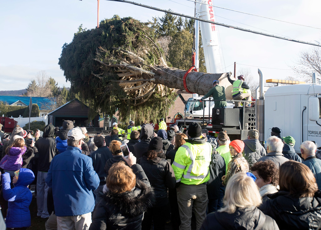 . A 94-foot Norway spruce that will serve as the Christmas tree at Rockefeller Center is loaded on a truck on Thursday, Nov. 10, 2016, in Oneonta, N.Y. The spruce is due to arrive Saturday in Manhattan, about 140 miles away. (AP Photo/Mike Groll)