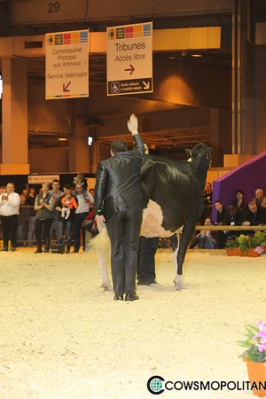 Holstein Intermediate