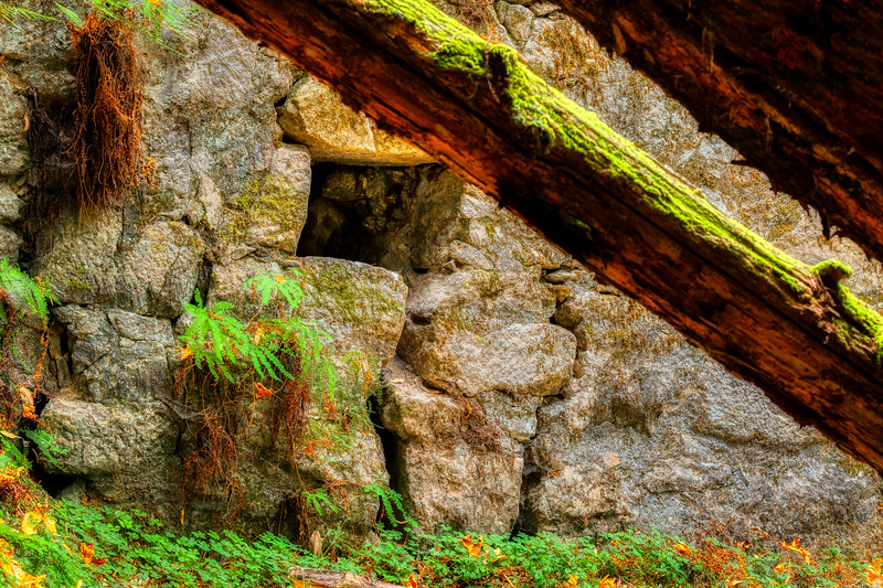 Lime Kiln 3, Henry Cowell Redwood State Park, California, 2010
