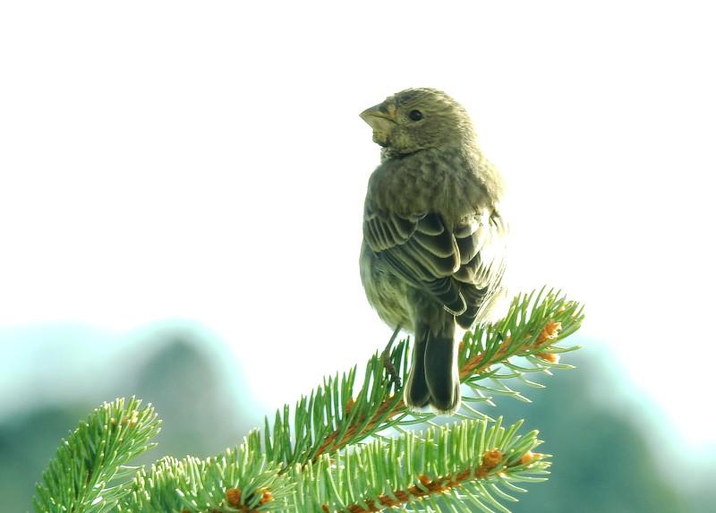 birds (122).JPG