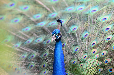 San Diego Zoo - April 2, 2011