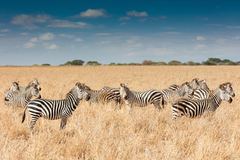 Africa - 102116 - 8116.jpg