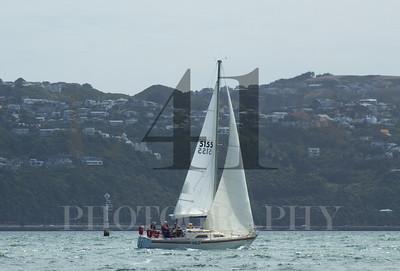 RPYNC Island Bay Race
