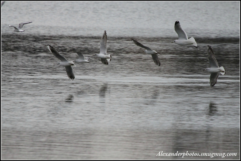 Lakeside Balderton 2011