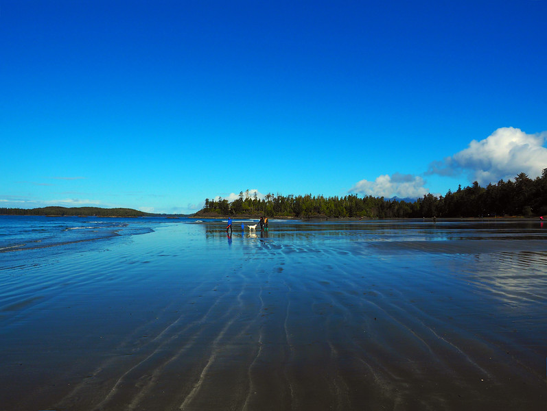 Mackenzie Beach dog 4.jpg