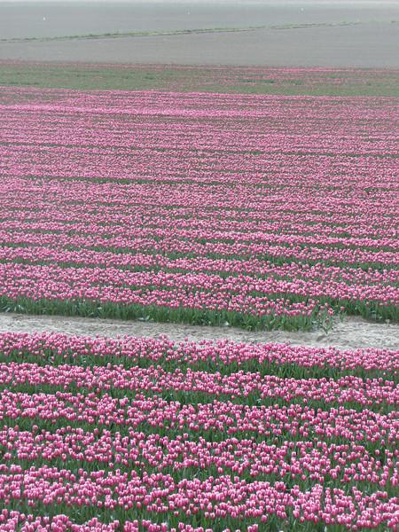Holland 2008 II 222.JPG