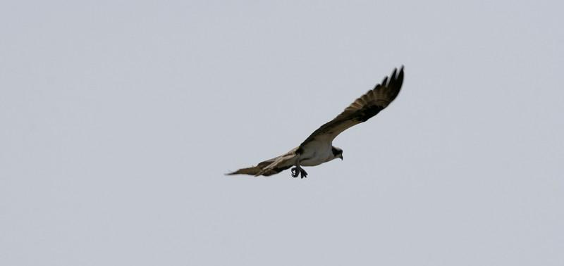 Jamica Bay Shots  April 14 2007 296.jpg