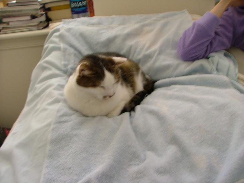 Convalescing Kitty