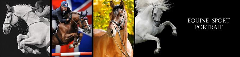 equine portrait final copy.jpg