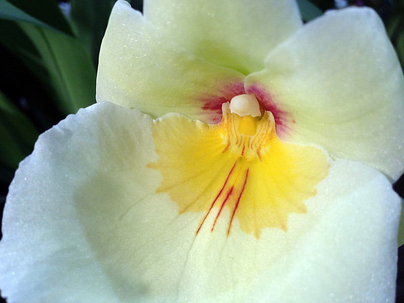 NW Flower & Garden Show