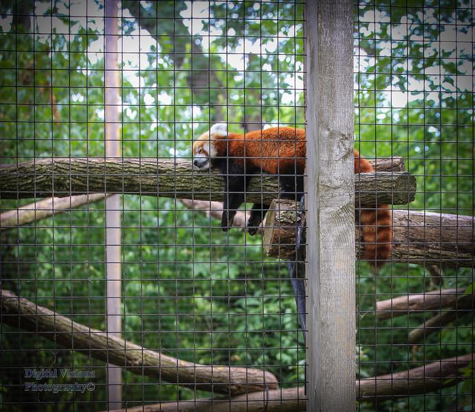 2016-07-17 Fort Wayne Zoo 707LR.jpg