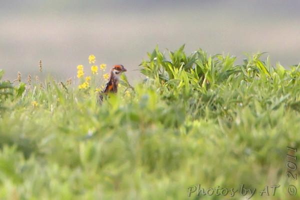 2011-05-03 Wah'Kon-Tah Prairie