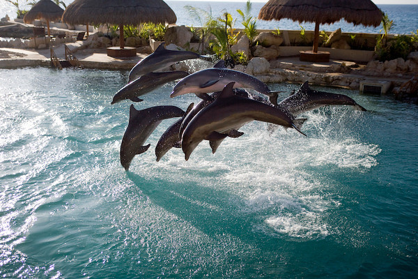 Dolphinaris Cozumel 12.jpg
