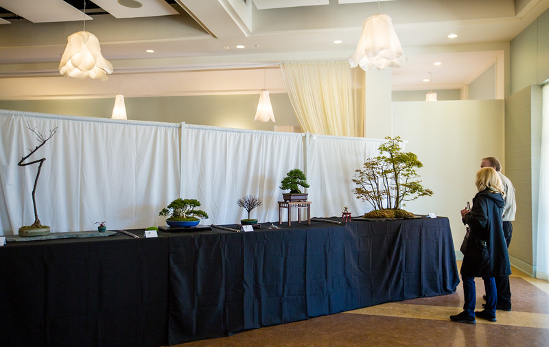 The Atlanta Botanical Garden hosts events, including the Atlanta Bonsai society show and judged competition.  Orchid Market Weekends happen monthly and offer expert advice, art booths and jewelry.  (Jenni Girtman / Atlanta Event Photography)