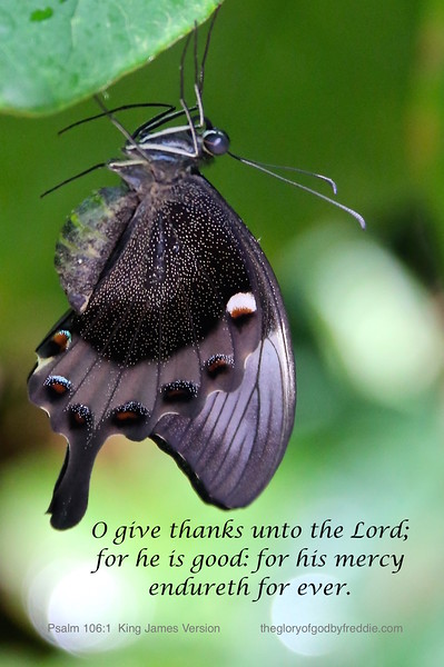 Psalm 106-1 d .jpg