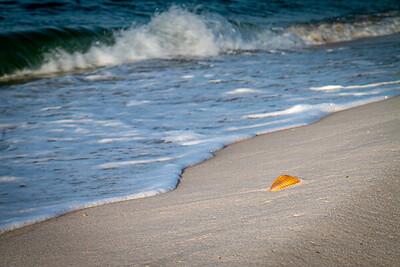 Seashell at Johnson Beach