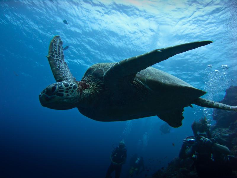 Skildpadde 3.jpg