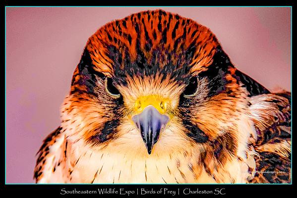 BIRDS of PREY CENTER | Photo Portraits | 2015