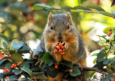 Squirrels and Chipmunks!