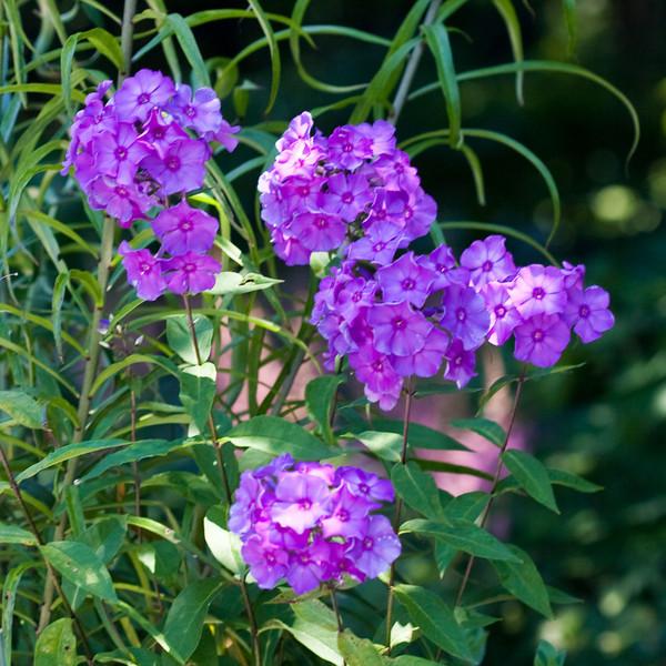 2009 06 30_NY Botanical Gardens_0749_edited-1.jpg