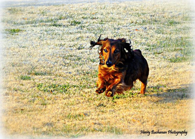 Run Boy !