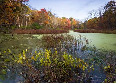 Greene Valley Forest Preserve