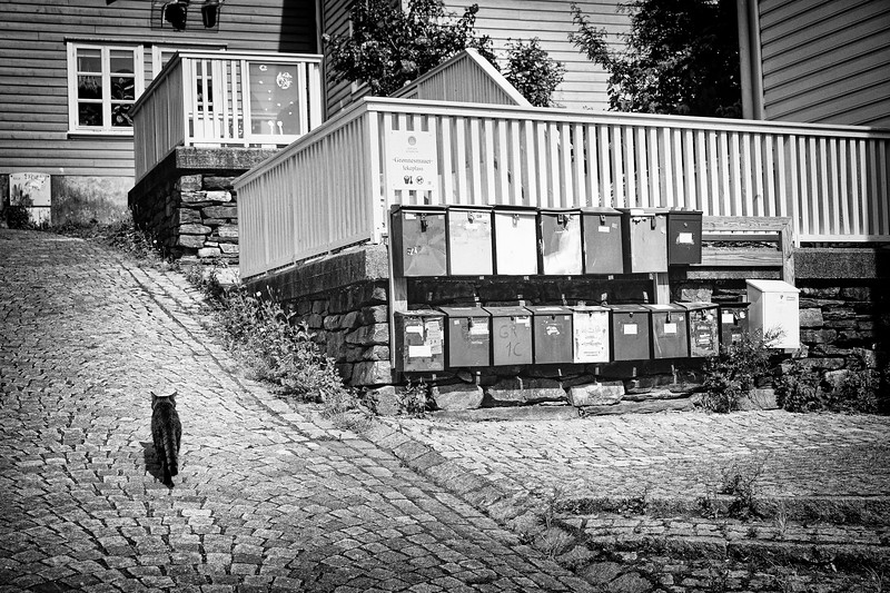 A cat walks through the neighborhood in Bergen, Norway.